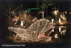 greenville celebrate the holidays at hollywild with the annual christmas lights safari