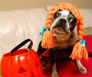 Halloween Pup