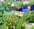 Asheville Herb Festival
