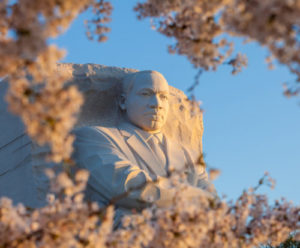 Martin Luther King Monument surrounded by cherry blossoms