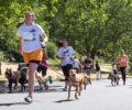 Participants in a dog-focused running event.