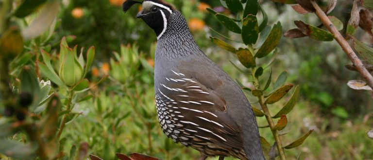 A quail sitting on a branch in the wild.